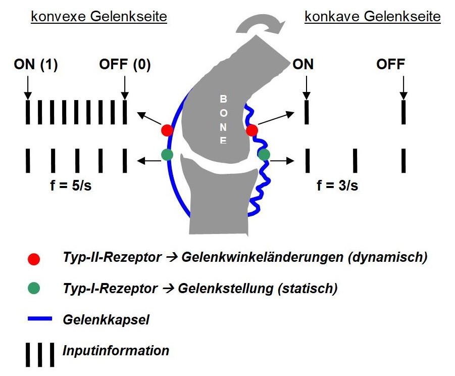 Grafik Biokybernetik
